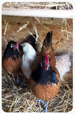 Spielzimmer und Hühner zum Kennenlernen